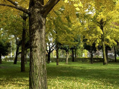 黄色と緑の絨毯