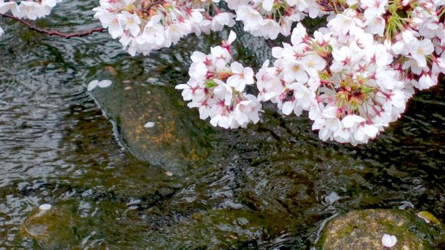 春の小川 その1