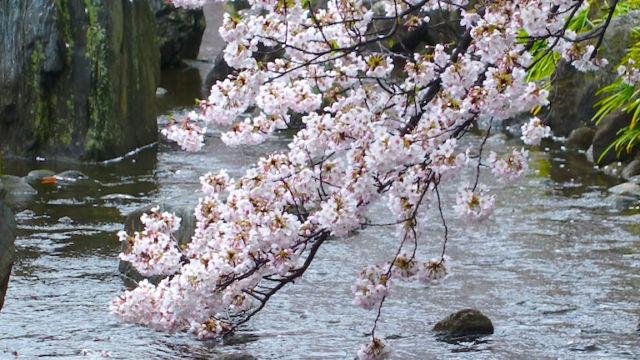 春の小川 その2