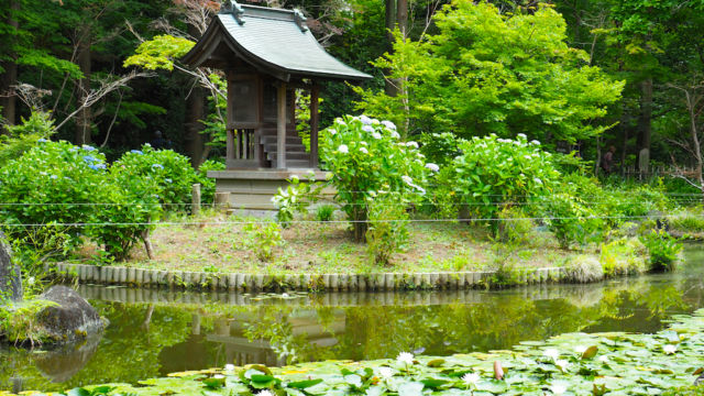 睡蓮の池に浮かぶ弁天堂