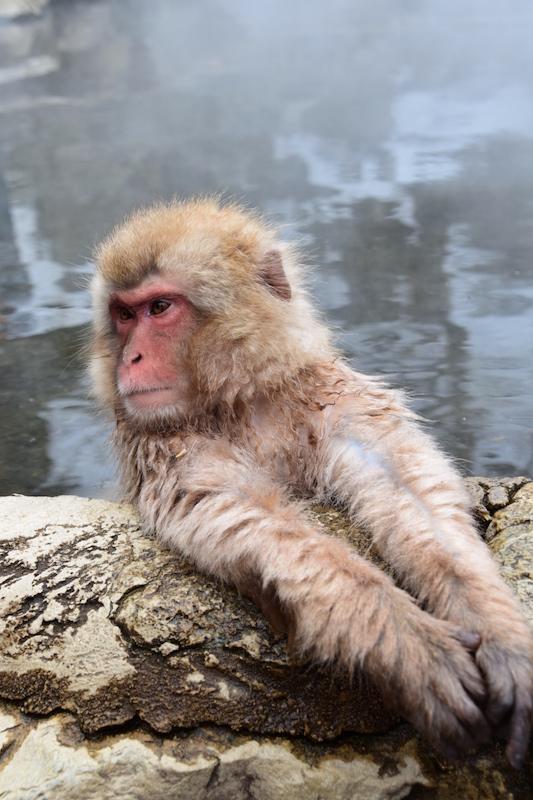 これぞ、温泉猿(笑)